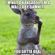 Kangaroo Meme - wallaby meme i m not a kangaroo i m a walllaby damn it you