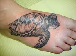 black and grey turtle on by kiersten barczewska