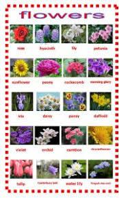 all flower names u2013 thin blog
