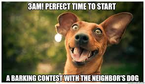 Stupid Animal Memes - dog meme generate a meme using dumb dog aminals pinterest