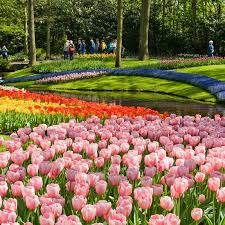 immagini di giardini fioriti tours tickets keukenhof e bulbi tours tickets