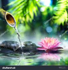 Zen Water Garden Zen Garden Black Stones Pink Waterlily Stock Photo 220140502