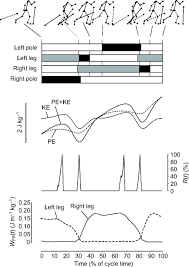 gait models and mechanical energy in three cross country skiing