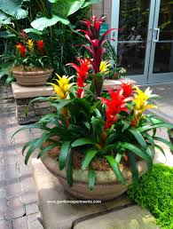 Outdoor Container Gardening Ideas Garden Container Garden Ideas New 44 Best Shrubs For Containers