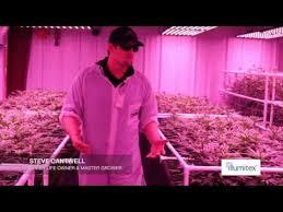 Led Grow Lights Cannabis Best 25 Best Led Grow Lights Ideas On Pinterest Led Lights