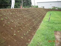 california native plant ground cover plants ground cover plants for slopes round designs