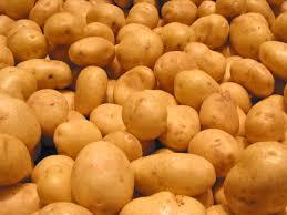 white potato free stock photo image picture white potato