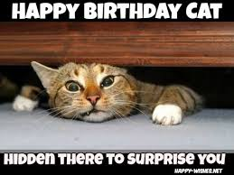 Cat Birthday Memes - happy birthday wishes for cats quotes images memes happy wishes