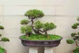 bonsai forest growing kit my tiny tree