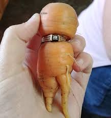 carats to carrot lost engagement ring found wrapped around veggie