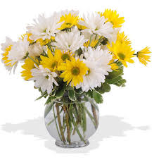about walter knoll u0027s dashing daisies bouquet daisies in a bubble