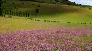 Ashland Flowers - field of flowers ashland oregon usa 4k stock video 411 679