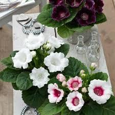 Indoor Flower Plants Buy Garden Plants From Online Garden Centre Gardening Express The