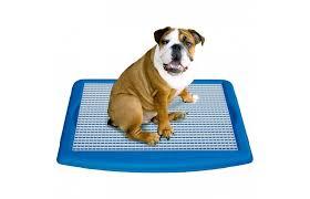Dog Peed On Bed Wizdog Indoor Dog Potty Dog Potty Dog Litter Box Pads For