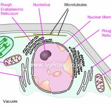 plant cell structure as biology