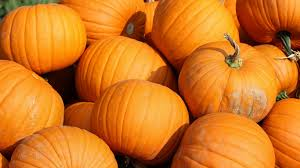laptop 1366x768 pumpkin wallpapers hd desktop backgrounds