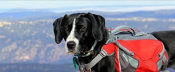 dog friendly colorado
