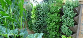 Support For Climbing Plants - ideas for small gardens growing vegetables vertically