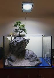 Aquascape Design Layout Faao Aquascaping Use Your Imagination 60l New Layout