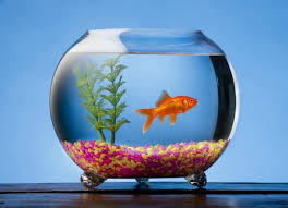 Beta Fish In Vase Fish That Can Live In A Bowl Petmd