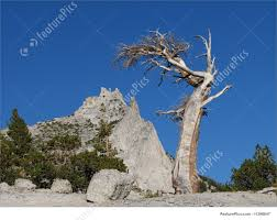 picture of alpine tree beds peak