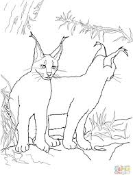 coloring pages cute kittens cats printable