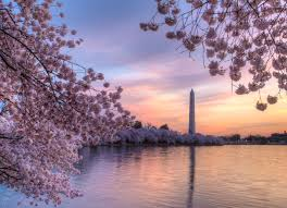 best of the 2018 cherry blossom festival washington d c