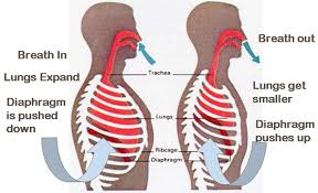 A Picture Of The Human Anatomy How Does Boyle U0027s Law Affect The Human Body Socratic
