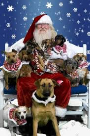 264 best christmas images on pinterest animals holiday ideas