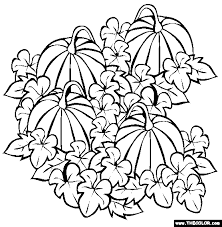 free coloring pages of a pumpkin free online coloring pages free coloring pages online for boys