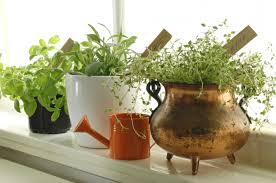 small garden ideas for your apartment home wizards
