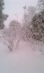 52 best spring snowfall images on pinterest flowers winter
