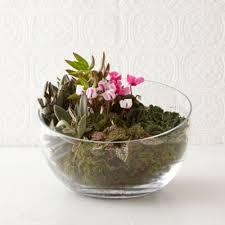 angled bowl terrarium terrain