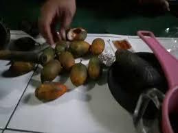 meramu sendiri obat kuat dengan bahan buah pinang atau jambe