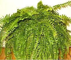 Common Tropical House Plants - a guide to high humidity houseplants dengarden