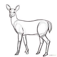 draw deer deer drawings deer drawing