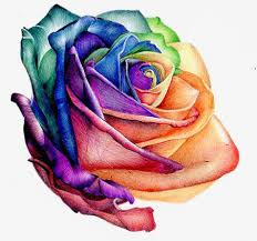 colorful roses colorful roses colorful color png image and clipart for