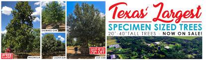 big tex tree nursery tree and plant nursery