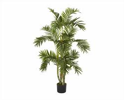 Large Indoor Plants House Plant Options