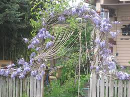 scene through my eyes wisteria