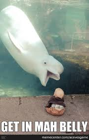 Whale Meme - beluga whale memes best collection of funny beluga whale pictures