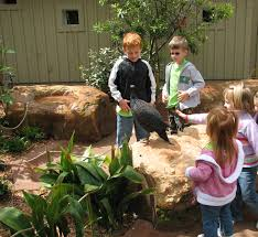 vulturine guineafowl barbara brem 2009 dallas zoo lacerte