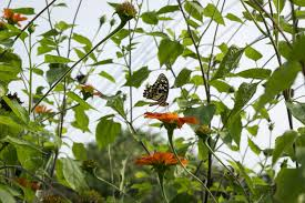 free images meadow prairie flower jungle insect botany