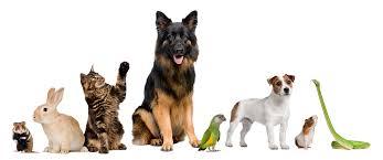 home pet health pharmacy