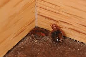 Massachusetts how do bed bugs travel images Bed bug control removal services dave 39 s pest control jpg
