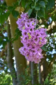 fairchild tropical botanic garden coral gables fl top tips