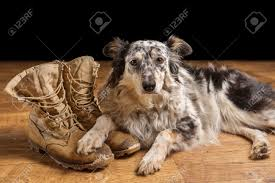 australian shepherd keychain war dog stock photos u0026 pictures royalty free war dog images and