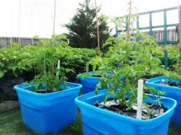 sow and sow gardens building a backyard food forest urban