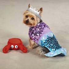 Halloween Costumes Small Dogs 115 Pet Friendly Halloween Costumes Images