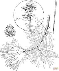 pine trees coloring page free printable coloring pages